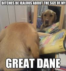bitches be jealous about the size of my great dane - Vanity Dog ... via Relatably.com