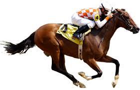 """Résultat de recherche d'images pour """"gif animés de cheval de course"""""""