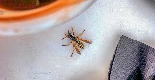 Wasp <b>Sting</b>: Reaction Symptoms, Treatments, and Remedies