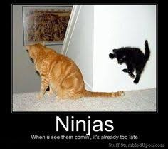 ninja memes | Ninjas meme ninja cat when u see them comin its ... via Relatably.com