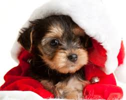 Image result for merry christmas puppy