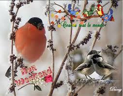"""Résultat de recherche d'images pour """"bon w e oiseaux"""""""