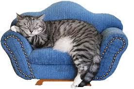 """Résultat de recherche d'images pour """"gif chats"""""""