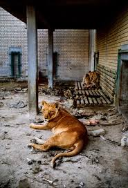 zoo during the gulf war all creatures great and small zoo during the gulf war all creatures great and small steve mccurry