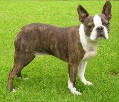 Ξέρετε πόσα είδη Terriers υπάρχουν;