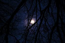 synthesis essay the beauty of optimism during the night nocturnal moon night throught the trees