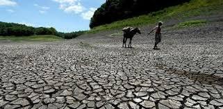 Resultado de imagem para seca nordeste