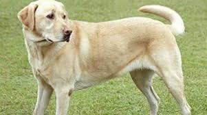 Αποτέλεσμα εικόνας για σκυλος