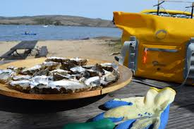 The <b>DryZone</b> series goes coastal on Tomales Bay with Blue Waters ...