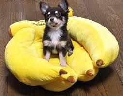 Μπανάνα -κρεβάτι!!!
