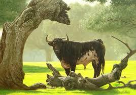 Resultado de imagem para touros no campo