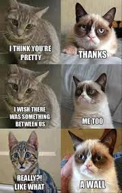 If you haven't noticed, I LOVE Grumpy Cat! Which is a liitle odd ... via Relatably.com