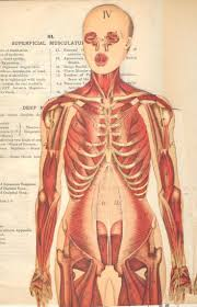 images about medical diagrams  amp  surgeries on pinterest    body parts from the family medical book