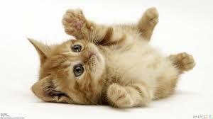 Baby cats images?q=tbn:ANd9GcS