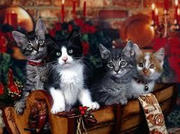 Αποτέλεσμα εικόνας για χριστουγεννιατικες εικονες