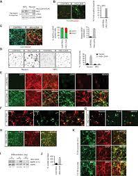 Developmental stage dependent metabolic regulation during meiotic     PeerJ Download figure