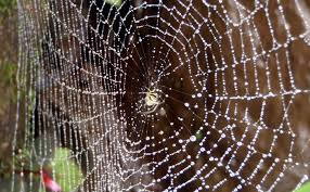 Image result for spider's web