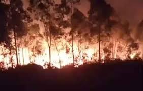 Video: Incêndio em área de mato na cidade de Morro Redondo
