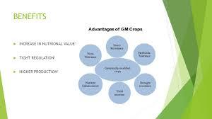 gmo food essay genetic modified foods advantages and disadvantages disadvantages slide html bioengineered foods essay bioengineered foods essay film connu