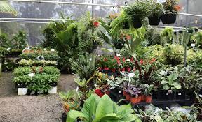 oxley nursery brisbane brisbane office plants