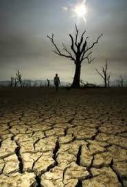 Risultati immagini per pioggie acide , conseguenze sull' ambiente