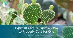 Types of <b>Cactus Plants</b> and How to Take Proper Care of Your Own