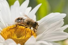 Propóleo, polen y jalea real.Remedios naturales para la psoriasis