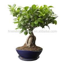 <b>Home Decor</b> Растения Маленький Фикус Microcarpa <b>Бонсай</b> - Buy ...