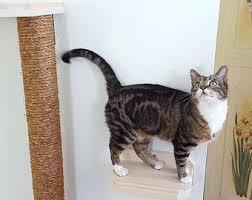 <b>Wood cat steps</b>   Etsy