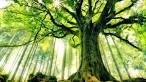 Деревья вампиры в магии