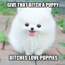 Give that bitch a puppy bitches love puppies - Little cute white ... via Relatably.com