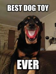 Smiling Dog Memes. Best Collection of Funny Smiling Dog Pictures via Relatably.com