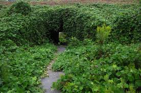 Image result for kudzu