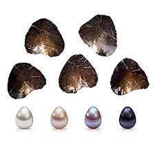 Milky Way 10Pcs Freshwater Cultured Oval Pearls,Oysters With ...