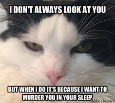Funny Cat Memes on Pinterest | Funny Cats, Funny Cat Pictures and Cats via Relatably.com