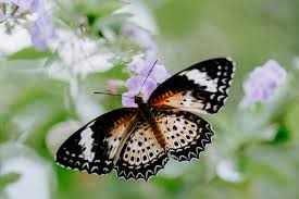 900+ <b>Butterfly</b> Images: Download HD Pictures & Photos on Unsplash