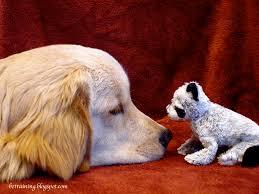 Τι μπορεί να σημαίνει η οσμή αμμωνίας στον σκύλο;