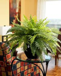 premier fern silk plant artificial plants for office decor
