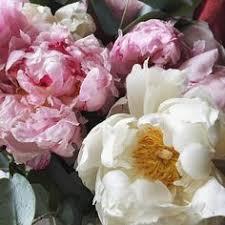 flowers: лучшие изображения (15) в 2019 г. | Букет цветов ...