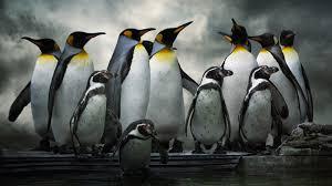 Image result for penguins