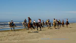 Image result for images ocean shores horse
