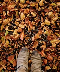 Image result for tumblr autumn pics