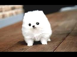 Funny <b>Puppies</b> And Cute <b>Puppy</b> Videos Compilation 2016 [BEST OF ...