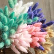 <b>30Pcs</b>/<b>lot Natural</b> Dried Flowers Colorful Lagurus Ovatus Real ...