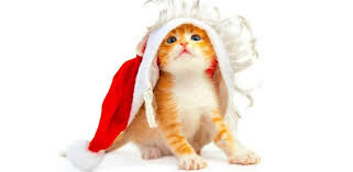 <b>Funny Christmas Cat</b> Wallpaper - Apps on Google Play