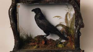 the raven rdquo by edgar allan poe the madness of nevermore crisis his pet raven grip had died