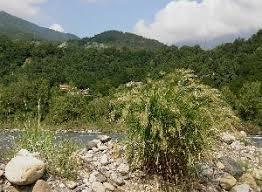 Poaceae