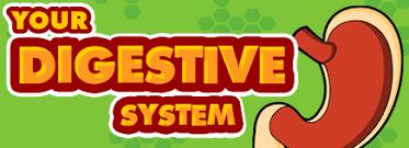 Resultado de imagen de digestive system for kid