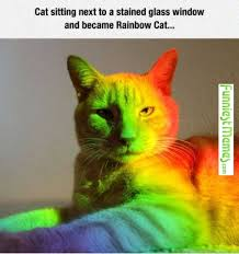 FunniestMemes.com - Funny Memes - [Cat Sitting Next To A Stained ... via Relatably.com
