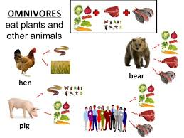 Image result for omnivore